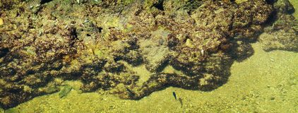 Rocks and fish inside the sea water. Seen from above on a sunny day Stock Images
