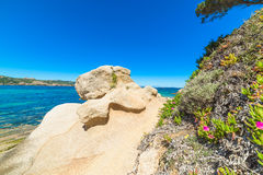 Rocks and flowers in Cala dei Ginepri Royalty Free Stock Photography