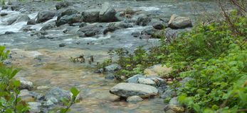 Rocks and water. Rocks in the flowing water of a river, green plants royalty free stock photography