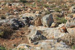 Rocks and Foliage in Dingli, Malta. Rocks and Foliage in Dingli, the highest cliffs in Malta Royalty Free Stock Photography