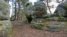 Rocks in Fontainebleau forest stock video footage