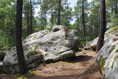 Rocks of Fontainebleau forest Stock Image