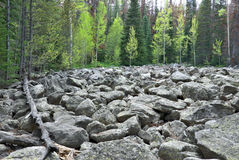 Rocks and Forest Stock Image