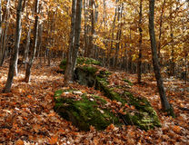 Rocks in the forest blanketed by the leaves of autumn Stock Photo
