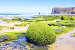 Rocks full of seaweed  at the atlantic ocean. Rocks full of seaweed at the westcoast in Portugal Stock Photography