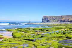 Rocks full of seaweed at the ocean in Portugal. Rocks full of seaweed at the atlantic ocean in Portugal Royalty Free Stock Photography