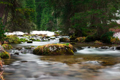 Rocks with grass in flowing water Royalty Free Stock Images