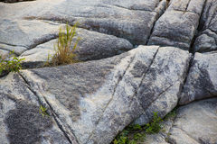 Rocks and grass. Old rocks and grass growing between the stones Royalty Free Stock Photo