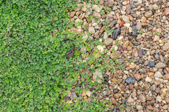 Rocks and grass texture Royalty Free Stock Images
