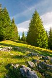 Rocks among the grassy glade in forest. Lovely nature background Royalty Free Stock Photography
