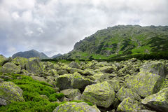 Rocks and green bushes in front of mountain peak Stock Image