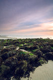 Rocks with green moss on the beach Stock Photo