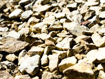 Rocks on the ground texture.  royalty free stock photos