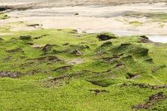Rocks in Gwangchigi beach in Jeju Stock Photos