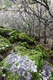 Rocks i skogen Royaltyfri Bild