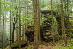 Rocks i skogen Royaltyfria Bilder