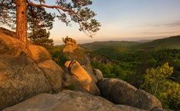 Rocks i skogen Fotografering för Bildbyråer