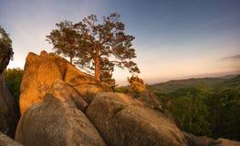Rocks i skogen Arkivbild