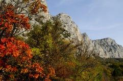 Rocks inramninga i röda leaves Arkivfoton