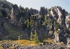 The rocks and larches Stock Photography