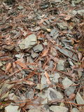 Rocks and leafs. Leafs on rock fragment floor. Hojas sobre suelo rocoso Royalty Free Stock Photography