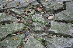 Rocks and Leaves Royalty Free Stock Photo