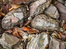 Rocks And Leaves. Close up detail Stock Photo