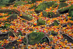 Rocks and Leaves Royalty Free Stock Photography