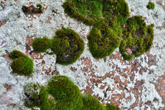 Rocks and lichen. Stock Image