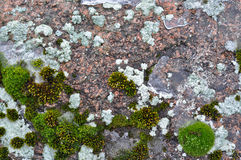 Rocks and lichen. Stock Images