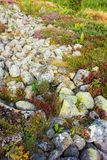 Rocks with lichens Stock Images