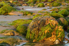 Rocks at low tide. Plant covered rocks at low tide on the shore Royalty Free Stock Photography