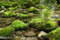 Rocks med moss Arkivbild