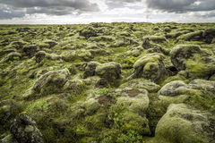 Rocks and Moss Stock Images