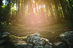 Rocks with moss in a forest and sunset background in Germany Royalty Free Stock Image