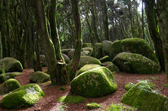 Rocks and moss in Sintra forest Royalty Free Stock Photos