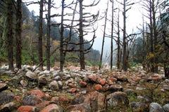 Rocks nd trees Stock Photo