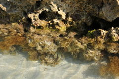 Rocks near the water with seaweeds Stock Photo
