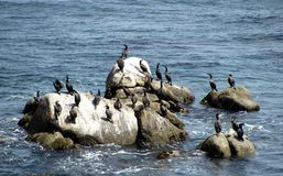 Rocks and the ocean view are beautiful at Monterrey Bay. This is in a beautiful setting near rocks and the ocean at Monterrey Bay. A great spot for the birds of Royalty Free Stock Images