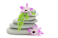 Rocks and Orchids. Beach stones stacked and arranged with Dendrobium nobilis orchid blooms and fern, isolated on white stock image