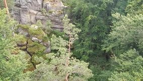Rocks overgrown with pine trees stock footage