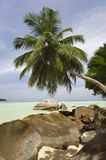 Rocks and palm trees along beach, Anse A La Mouche, Mahe`, Seychelles Royalty Free Stock Photography
