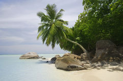 Rocks and palm trees along beach, Anse A La Mouche, Mahe`, Seychelles Stock Photo