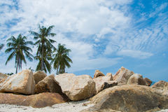 Rocks with palms Royalty Free Stock Image