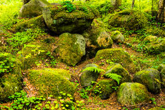 Rocks in the pine forest. Beoutyful summer forest with rocks and some plants Royalty Free Stock Photography