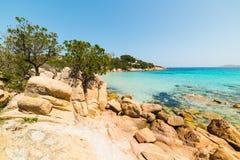 Rocks and pine trees. In Capriccioli beach, Sardinia Stock Image