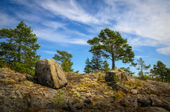 Rocks and pines Royalty Free Stock Images