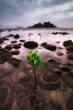 Rocks and plant in shallow water Royalty Free Stock Photo