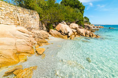 Rocks and plants in Capriccioli beach Royalty Free Stock Image