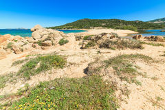 Rocks and plants in Ea Bianca beach Stock Photography